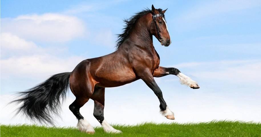 cavalli in vendita, quarter horse, Residence la Frontiera
