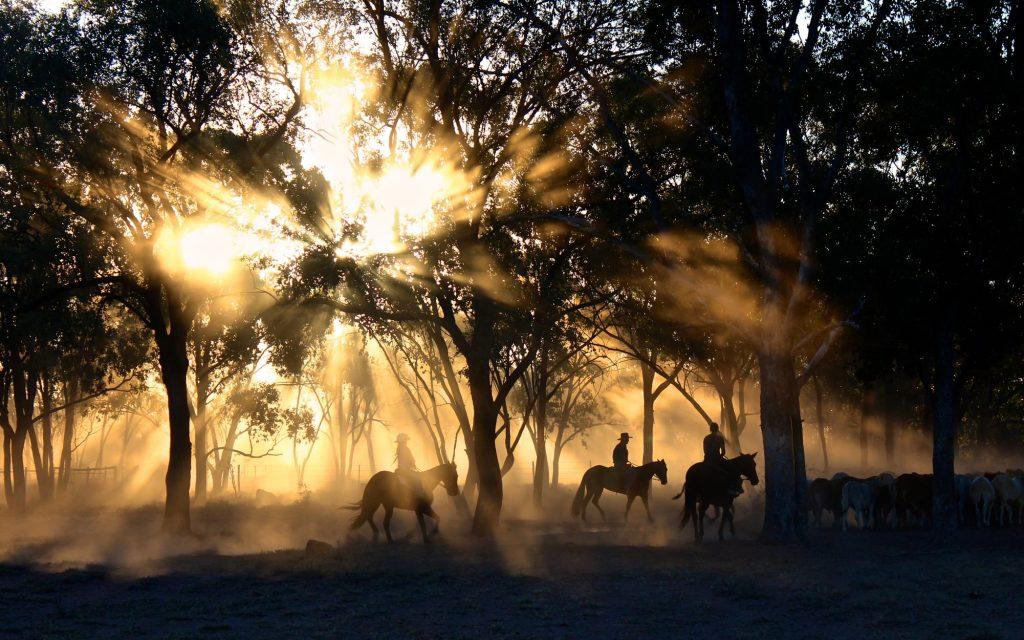 Escursioni-e-passeggiate-a-cavallo